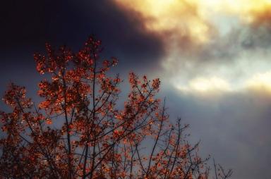 Photo by Susan Licht